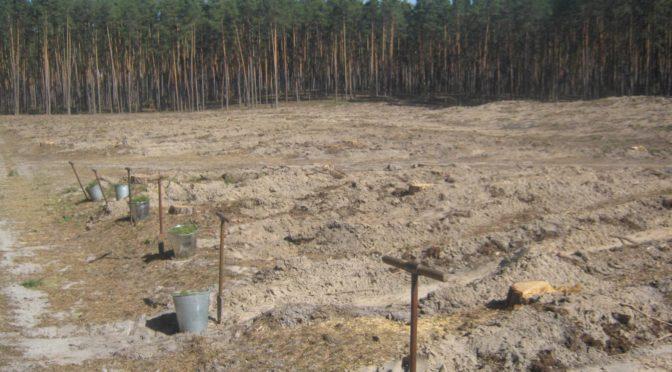 Лісокультурна кампанія на Сумщині триває