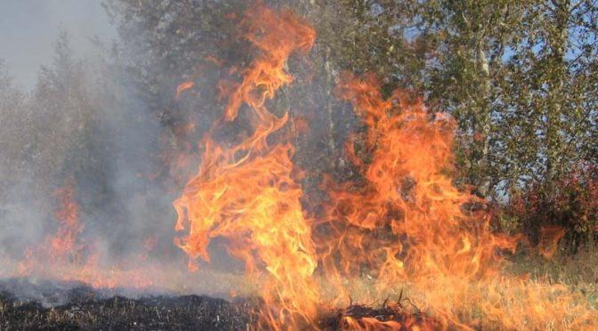 На часі – попередження лісових пожеж