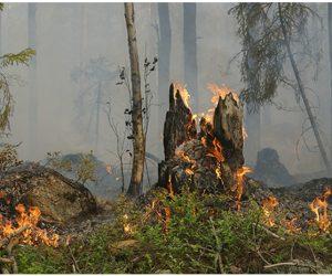 Держлісагентство закликає громадян дотримуватися правил пожежної безпеки під час перебування у лісі