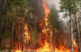 Вогонь у лісі
