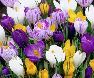 Міжнародний жіночий день 8 березня — чудовий привід, щоб привітати прекрасну половину робочого колективу зі святом
