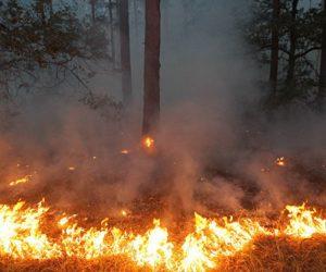 Попередимо лісові пожежі!