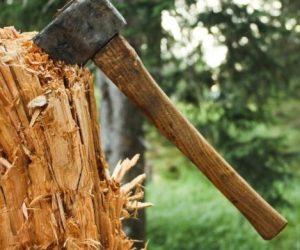 Збільшена відповідальність за незаконну вирубку лісу та подальший його експорт
