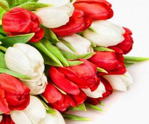 Міжнародний жіночий день 8 березня — чудовий привід, щоб привітати прекрасну половину людства зі святом