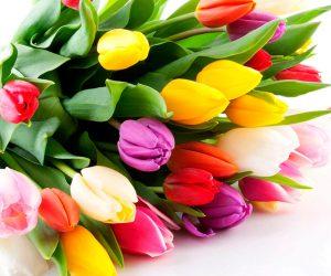 Міжнародний жіночий день 8 Березня — чудовий привід, щоб привітати прекрасну половину колективу зі святом