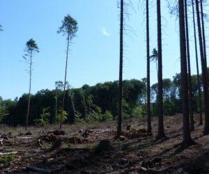 Зміна клімату: в Німеччині гинуть ліси