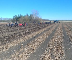 Лісокультурну кампанію на Лебединщині розпочато