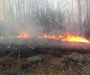 На Сумщині локалізували вісім лісових пожеж