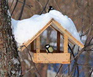 Оголошуємо конкурс на кращу годівничку!Нагодуйте птахів взимку, а вони віддячать вам влітку!