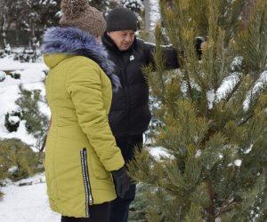 Сумські лісгоспи пропонують широкий асортимент хвойного новорічного товару