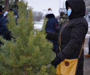 Сумські лісівники за підсумками ялинкової кампанії серед лідерів в Україні