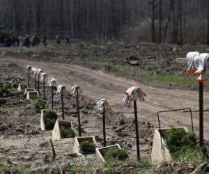 На Сумщині лісокультурна кампанія набирає обертів