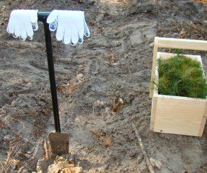 Сумські лісівники вже висадили майже 4 мільйони дерев