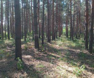 Повідомлення про появу ознак погіршення санітарного стану лісів