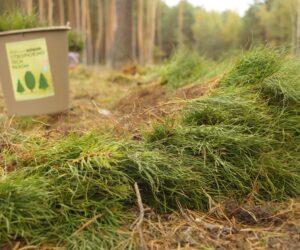 """Реалізація програми Президента """"Зелена країна"""": висаджено більше 4 мільйонів майбутніх дерев"""