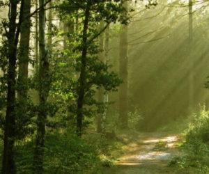 Громадська рада при Держлісагентстві просить владу не допустити передачу в концесію лісгоспів