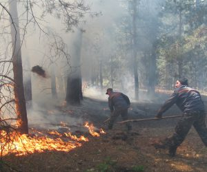 В лісах Сумщини надзвичайна пожежна небезпека