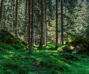 Лісовпорядкування розпочалось
