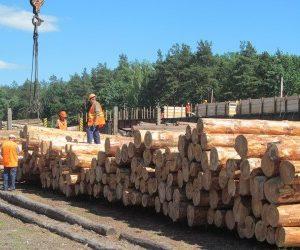 Держлісагентство зменшило обсяги заготівлі деревини