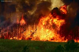 Збережемо ліс від пожеж!