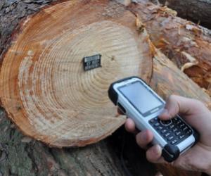 Колегія Держлісагентства рекомендувала реалізовувати деревину через електронні сервіси, зокрема, систему ProZorro