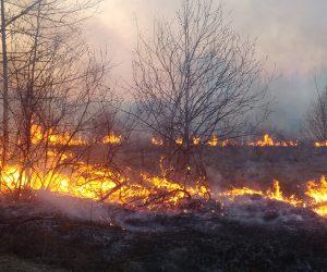 Небезпека лісових пожеж