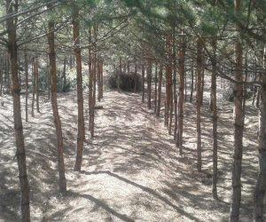 Рубки догляду за лісом – один із  найважливіших лісогосподарських  заходів