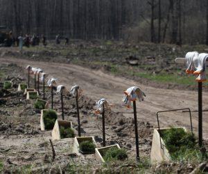 В рамках проєкту Озеленення України на Сумщині висадять понад 83 000 дерев