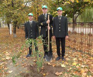 Озеленили територію Будильської школи