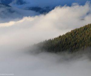 На колегії Держлісагентства обговорили питання інвентаризації лісових земель