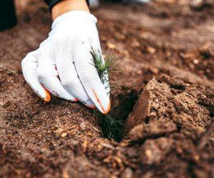 На Сумщині весняна лісокультурна кампанія завершилась: висаджено 7,4 млн дерев