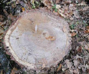 """Лісівники ДП """"Лебединський лісгосп"""" виявили самовільний поруб."""